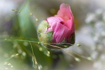 Roze bloemknopje van een roos van Rietje Bulthuis