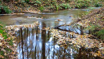 Bosbeekje met stromende water van Fotografiecor .nl