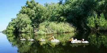 Donaudelta van Stefan Havadi-Nagy