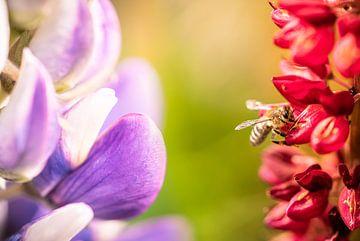 Bloemenpracht van Jeroen Mikkers