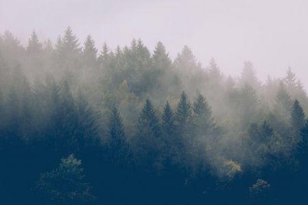 Herfstbos in de mist van Joseph Selier