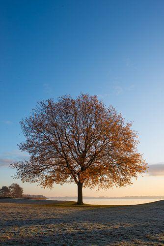 boom met zonsopgang in de winter