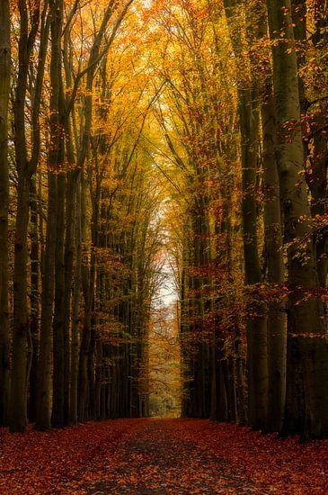 Highway to Heaven van Martin Podt