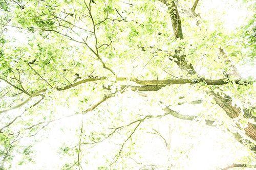 Zonlicht door bomen | Zachte groene kleuren | Kleuren print