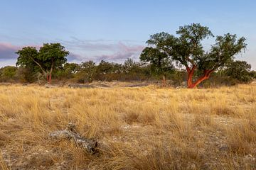 Landschap met kurkeiken in Alentejo, Portugal van OCEANVOLTA