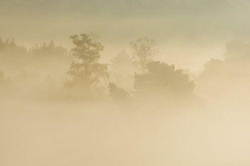 mistige ochtend op de brunssummerheide van Francois Debets