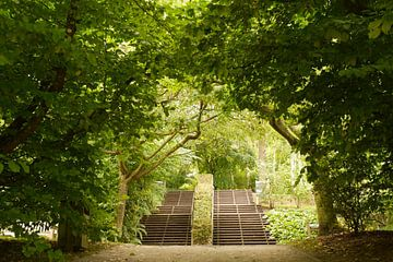 Escaliers I Jardin botanique I Jardins de Valloires I Picardie, France I Impression couleur