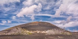 Landschap van La Geria op Lanzarote met vijgebomen op de voorgrond en de typisch vulkaankleur van de