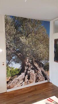 Kundenfoto: Oude olijfboom in Spanje von Peter Schütte