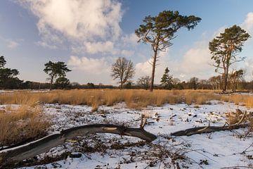Winters landschap in Drenthe van Harry Kors