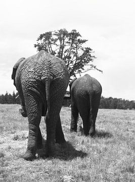 Elephanten von Olaf Franke