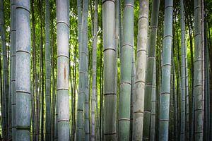 De stam van de bamboe van
