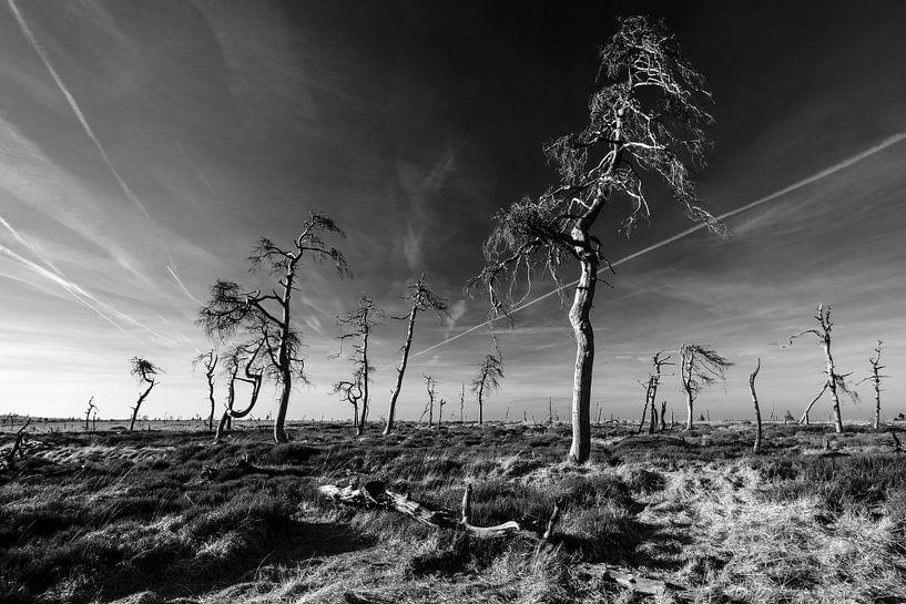 Hoge Venen in zwart-wit - 4 van Edwin van Wijk