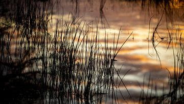 Reflexionen des Sonnenaufgangs im Wasser von Studio de Waay