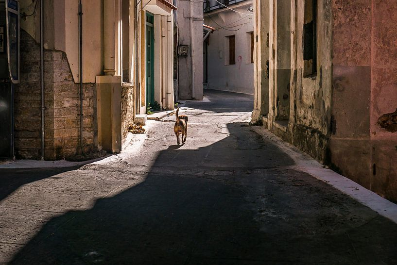Hondje in de straat van Edith Frieling