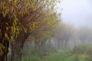 knotwilgen in de mist van Karina Baumgart