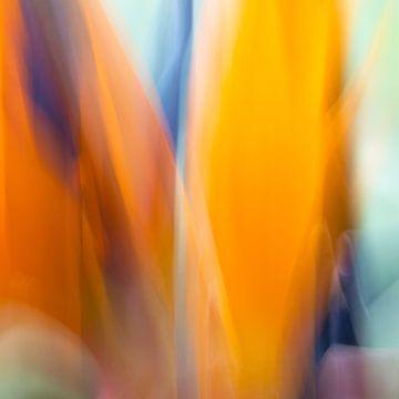 Fleur de l'oiseau de paradis en mouvement sur Leontine van der Stouw