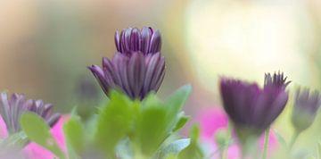 Zachte paarse bloemen frisheid van Anke Winters