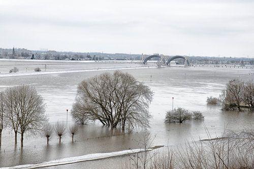 De uiterwaarden van de Rijn bij Doorweth.