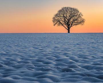 een eenzame boom in de sneeuw van Hans Brasz
