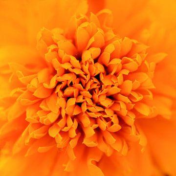 Oranje bloem von Paul Arentsen