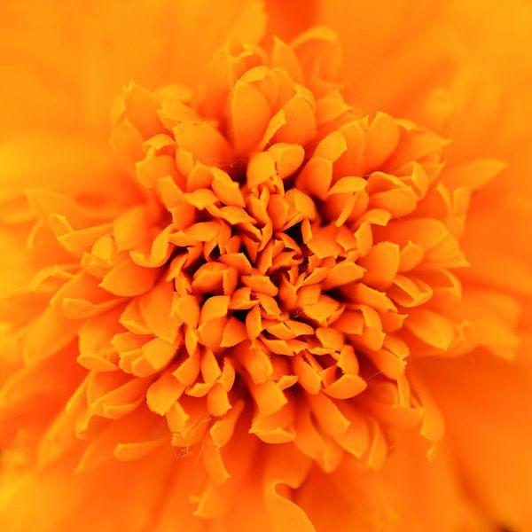 Oranje bloem van Paul Arentsen
