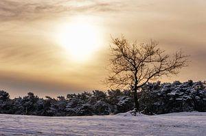Boom in de sneeuw in het Nationaal Park De Loonse en Drunense duinen  van