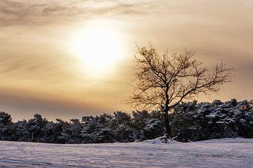 Boom in de sneeuw in het Nationaal Park De Loonse en Drunense duinen  sur Judith Spanbroek-van den Broek
