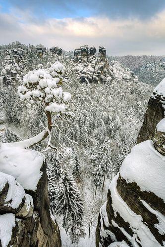 Bastei pine tree in Saxon Switzerland in winter #2 van Michael Valjak