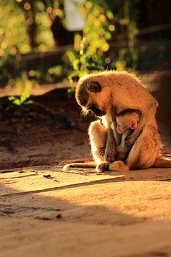 Vervet Mutter Affe mit Baby von Bobsphotography