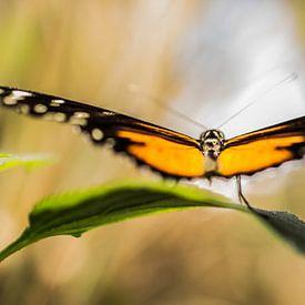 Abstracte monarchvlinder van Zsa Zsa Faes