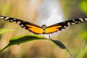Abstracte monarchvlinder van