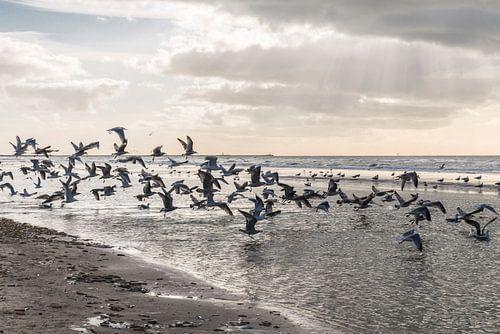 Strand Wijk aan Zee van Corali Evegroen