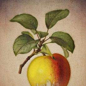 Appel - Antieke tekening van een appel van Jan Keteleer
