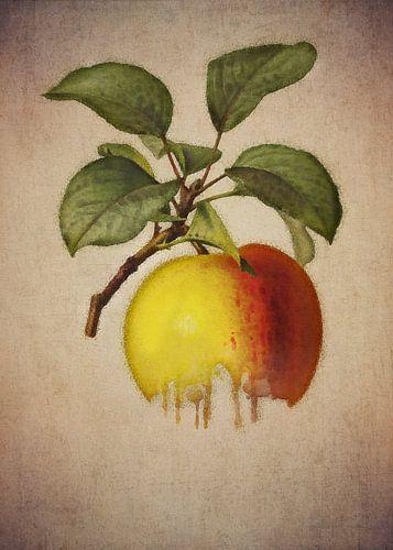 Apple - Dessin ancien d'une pomme sur