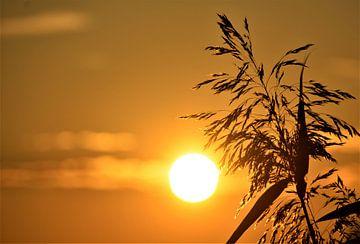Sonnentag von A'da de Bruin
