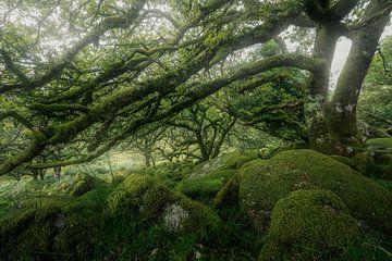 Mystieke wereld van met mos beklede keien van Joris Pannemans - Loris Photography