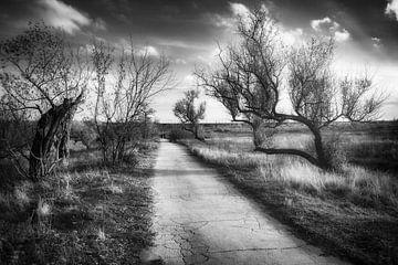 Herbststraße von Vladyslav Durniev