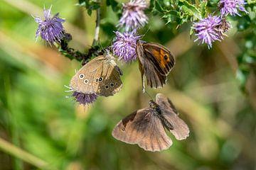 Drie vlinders van Hans-Jürgen Janda