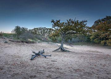 Einsamer Baum von Patrick Herzberg