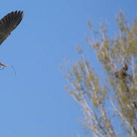 vogel bird von Erwin Zwaan