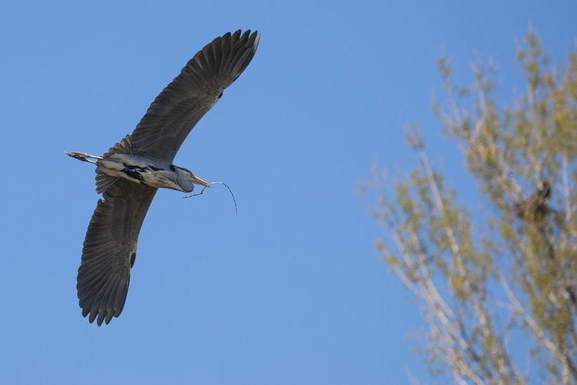 vogel bird van Erwin Zwaan