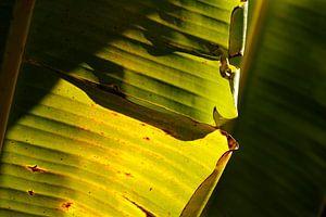 Palmblad close-up van Inge Teunissen