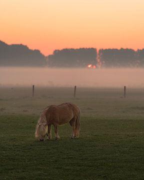 Pony in de natuur van Mirac Karacam