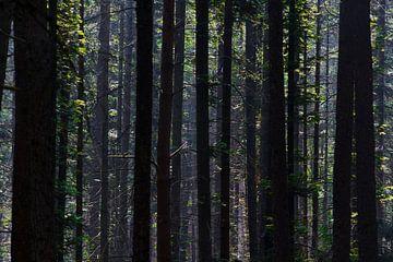 Uitzicht in het bos op de Utrechtse Heuvelrug van Richard de Boorder