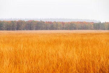 Veluwe heide in de herfst von Dennis van de Water