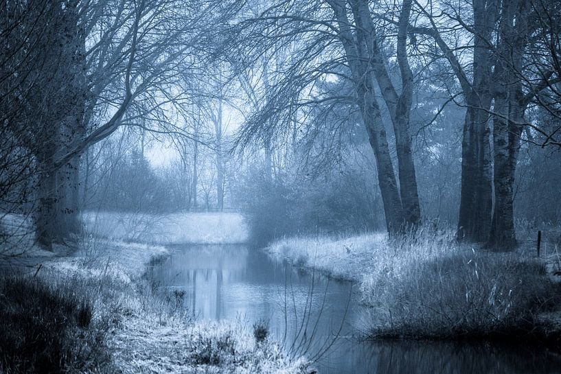 Mystiek bos en beek van Fotografie Jeronimo