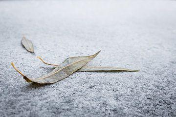 Vergänglichkeit Welke Blätter im Winter auf Raureif von Dieter Walther