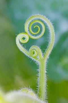 Groen Plant Uitlopertje von Ingrid Leegte