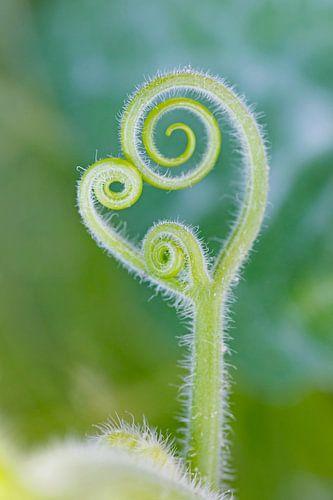 Green Plant Sprout von Ingrid Leegte